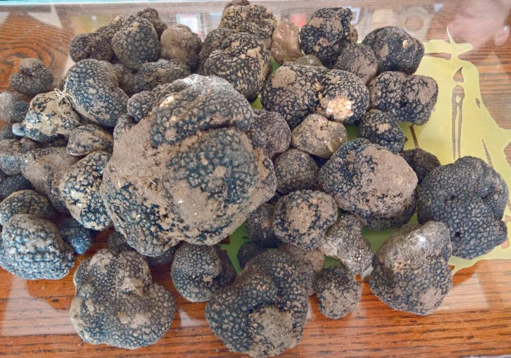 Tartufo Nero d'Estate